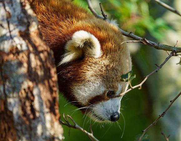 Marwell Zoo - 19/10/2019@14:05