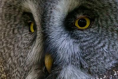 Marwell Zoo - 19/10/2019@11:20