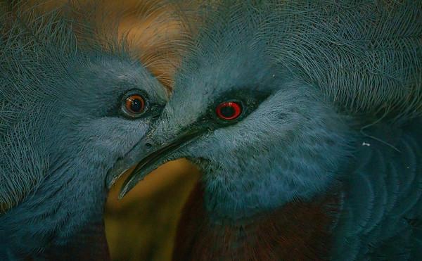 Marwell Zoo - Tue 28/07/2020@11:34