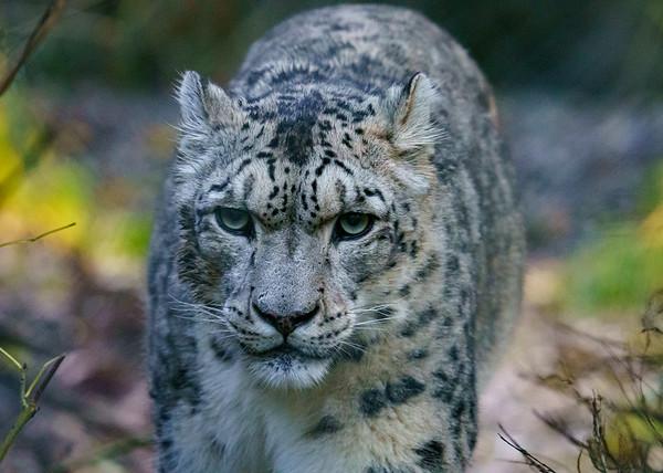Marwell Zoo - 19/10/2019@11:14