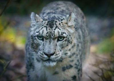 Marwell Zoo, Topaz Studio - 19/10/2019@11:14