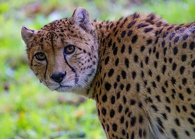 Marwell Zoo - 19/10/2019@16:01