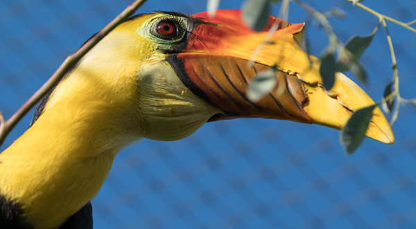 Animals, Birds, Marwell Zoo, Wrinkled Hornbill @ Marwell Zoo, City of Winchester,England - 04/02/2018