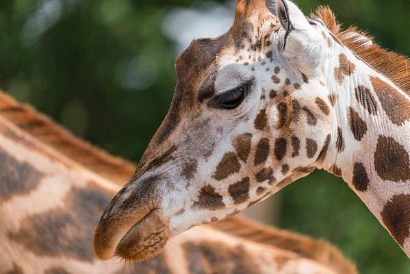 Marwell Zoo - 19/08/2019@12:36