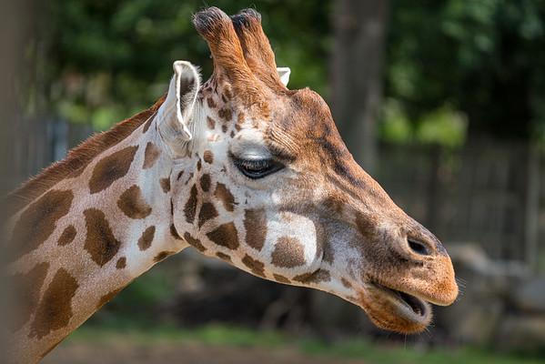 Marwell Zoo - 19/08/2019@12:37