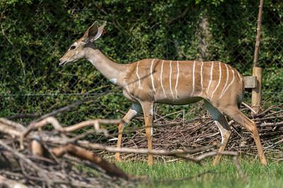 Marwell Zoo - 19/08/2019@12:34