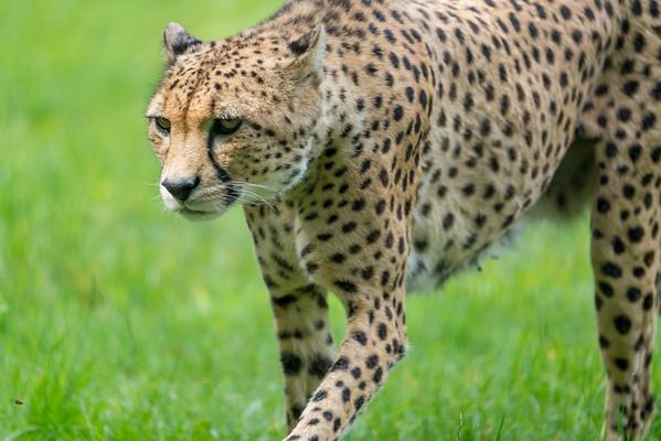 Marwell Zoo - 19/08/2019@11:20