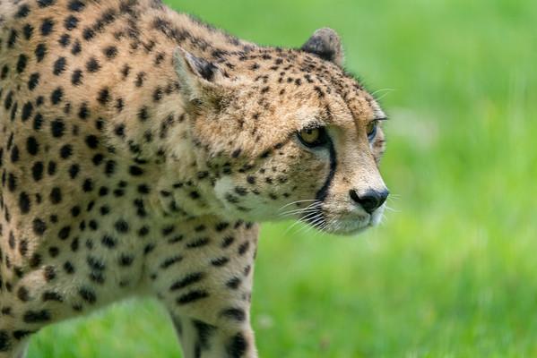 Marwell Zoo - 19/08/2019@11:21