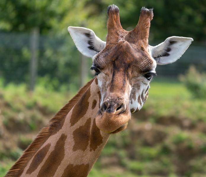 Marwell Zoo - 19/08/2019@12:41