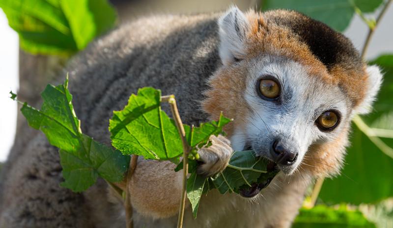 Marwell Zoo - 19/09/2019@11:17
