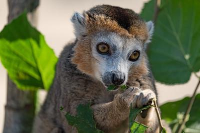 Marwell Zoo - 19/09/2019@11:18