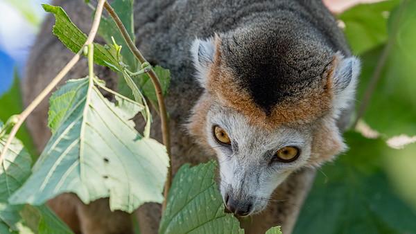 Marwell Zoo - 19/09/2019@11:16