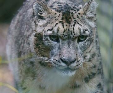 Marwell Zoo - 19/10/2019@11:12