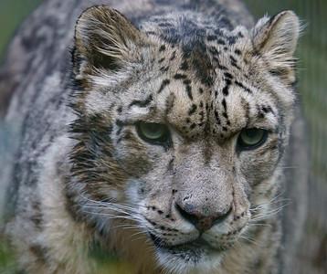 Marwell Zoo - 19/10/2019@11:11