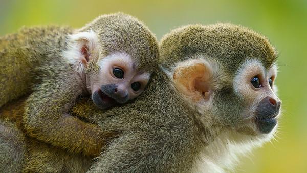 Marwell Zoo - 19/10/2019@12:27