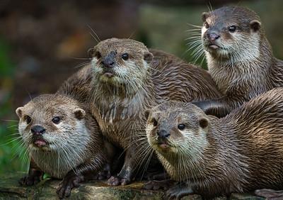 Marwell Zoo - 19/10/2019@13:02