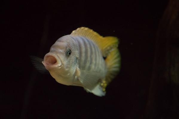 Animals, Fish, Marwell Zoo; ,,,