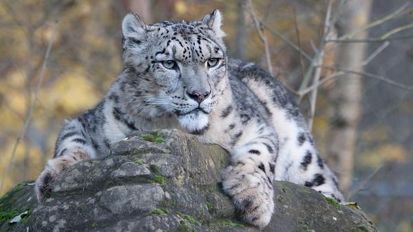 Marwell Zoo; ,,,