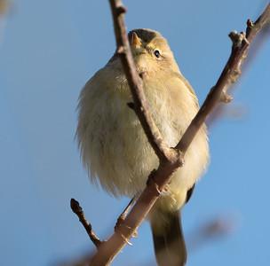 Animals, Birds, Marwell Zoo, Walkthrough Aviary