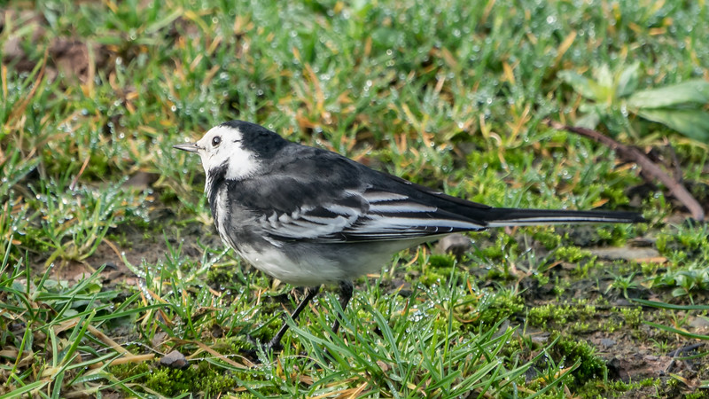 Animals, Birds, Coal Tit, Marwell Zoo @ Marwell Zoo, City of Winchester,England - 28/01/2018