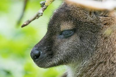 Marwell Zoo - 28/09/2019@15:18