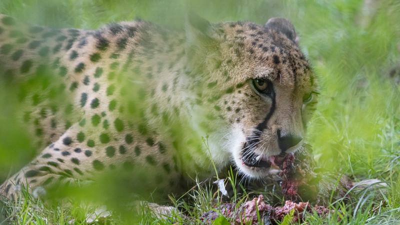Marwell Zoo - 28/09/2019@11:19