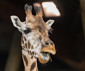 Marwell Zoo - 28/09/2019@11:59