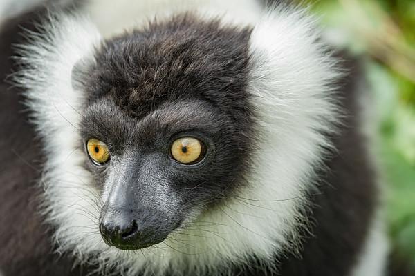 Marwell Zoo - 28/09/2019@11:43