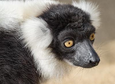 Marwell Zoo - 28/09/2019@11:41