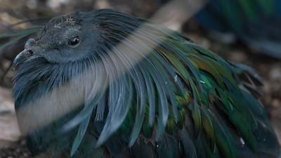 Animals, Birds, Marwell Zoo, Walkthrough Aviary @ MarWell Zoo, City of Winchester,England