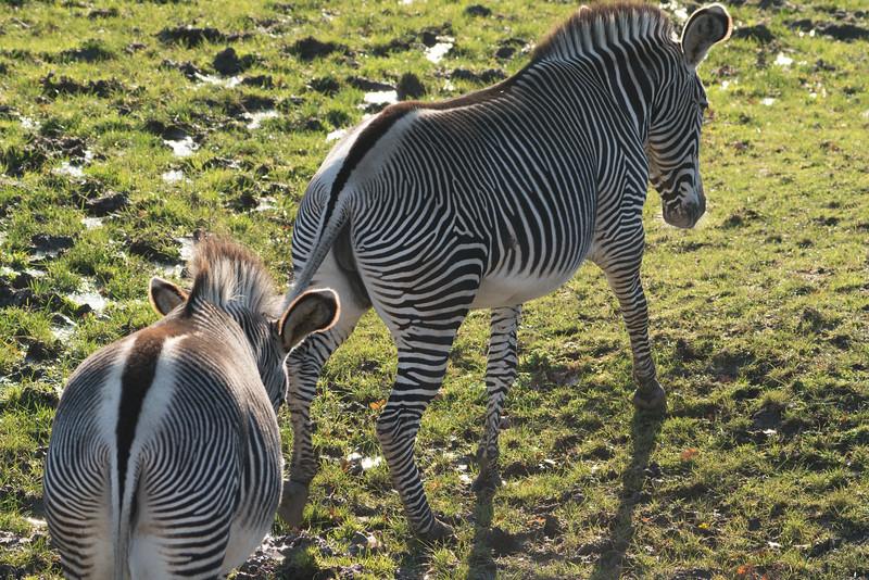 Marwell Zoo; MarWell Zoo,Owslebury,Hampshire,England
