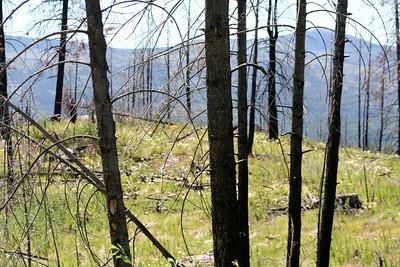 Jocko Lake Fires Plus 3 Years