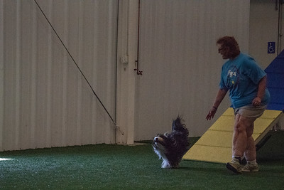 Mary Private Gallery - Agility