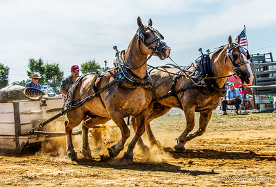 2015/08/15 HoCo Fair Draft Horse Pull