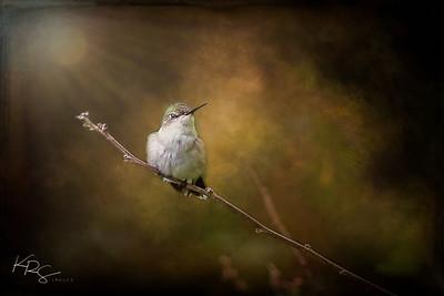 Sunlit Hummingbird