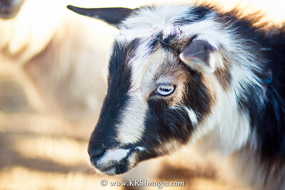 Blue Eyed Luke