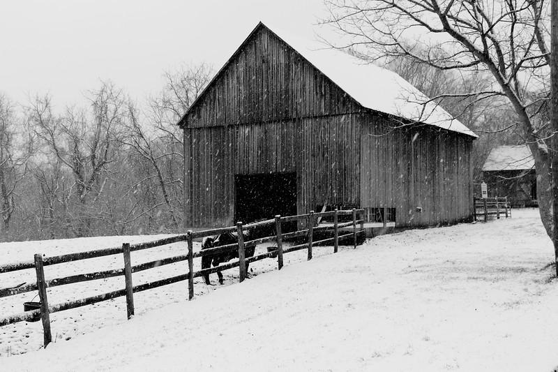 Snowy Dodon Farm