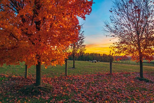 Autumn Bliss