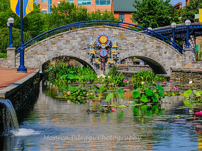 Carroll Creek 4 Aug 2019-7158