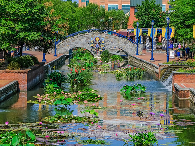Carroll Creek 4 Aug 2019-7171