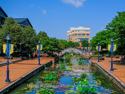 Carroll Creek 4 Aug 2019-7175