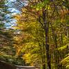 Fall Colors Gambrill 1 Nov 2018-9951