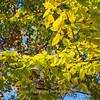 Fall Colors Gambrill 1 Nov 2018-9952