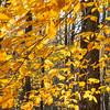 Fall Colors Gambrill 1 Nov 2018-9927