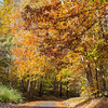 Fall Colors 3 Nov 2018-0042