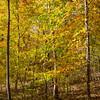 Fall Colors 3 Nov 2018-0038