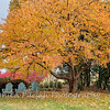 Fall Colors 3 Nov 2018-112426