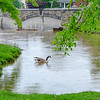 Baker Park lood 16 May 2018-9640