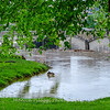 Baker Park lood 16 May 2018-9638