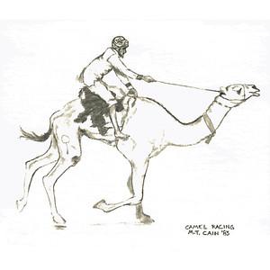 racing camel 5X5